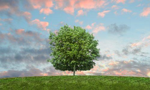Drzewo - eko